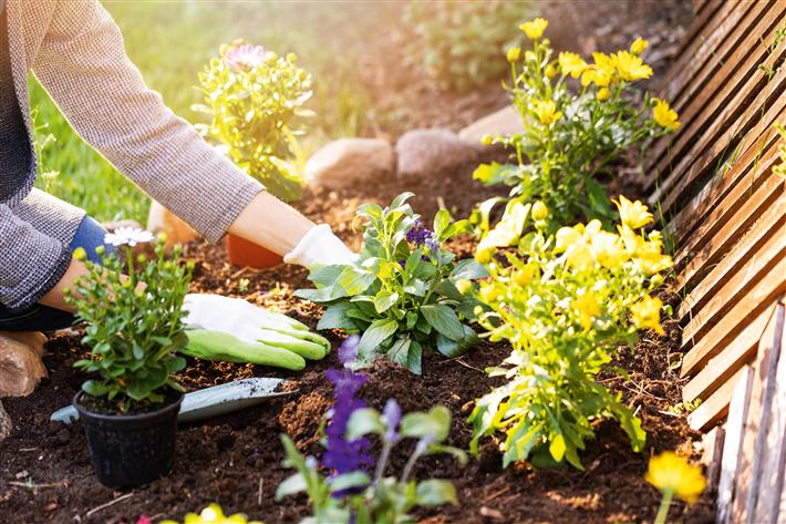 Von torffreier Erde und Bienenschutz bis zu fairen Nordmanntannen in der Weihnachtszeit: toom baut das nachhaltige Produktsortiment konsequent aus. © toom/Shutterstock