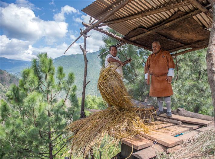 Bio-Anbaupartnerschaft Bhutan für Lemongrass und Rosa alba © Primavera