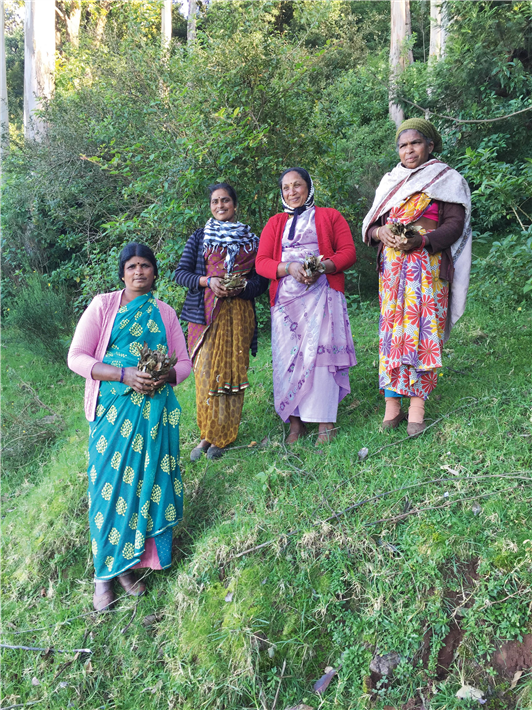 Bio-Anbaupartnerschaft Indien für Eukalyptus © Primavera
