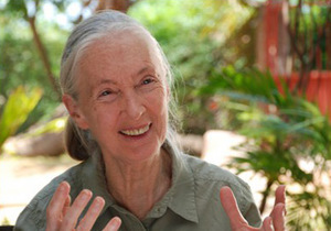 Jane Goodall © Jane Goodall Institut