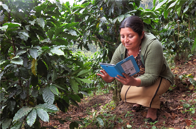 Leticia Monzon mit Tablet auf ihrer Rainforest-Alliance-zertifizierten Kaffeefarm in Guatemala. © Rainforest Alliance