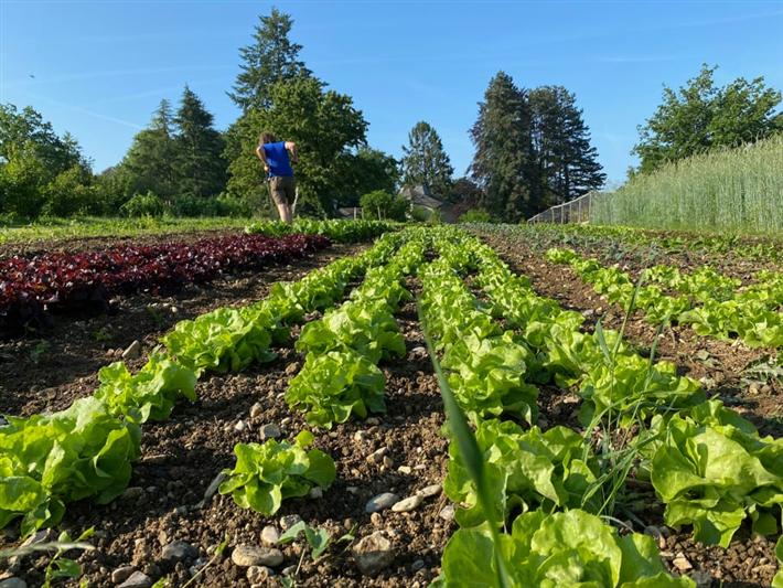 Gemüseanbau im Goetheanum-Gartenpark (Foto: Sebastian Jüngel)