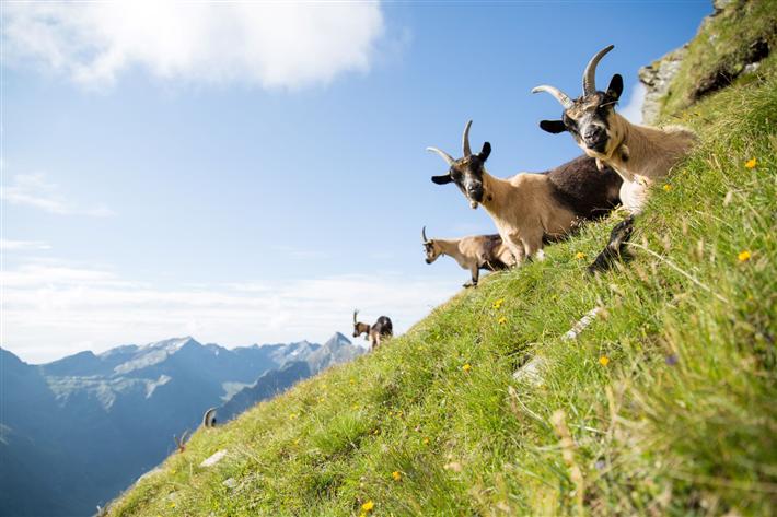 Gerade in den Alpen zeigt sich die Natur vielerorts noch in ihrer ursprünglichen Schönheit. © TV Passeiertal